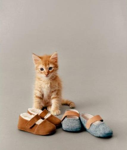 campañas de moda con gatos